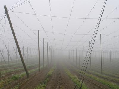https://imgc.allpostersimages.com/img/posters/hop-garden-in-the-hallertau-autumn-fog_u-L-Q11YERI0.jpg?p=0