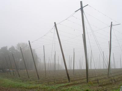 https://imgc.allpostersimages.com/img/posters/hop-garden-in-the-hallertau-autumn-fog_u-L-Q11YESA0.jpg?p=0