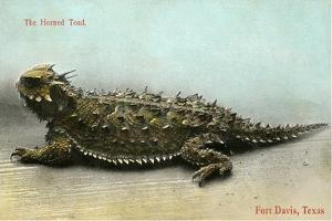 Horned Toad, Fort Davis