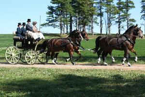 Horse and Buggy 2 Photo Art Print Poster