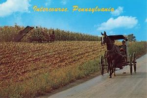 Horse and Buggy, Intercourse
