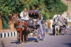 Horse and carriage on Riverside Drive in Luxor, Thebes West, Kena, Egypt