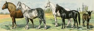 Horse Breeds: Belgian and Percheron Draft Horses, a Trotter, An Arabian, and a Donkey