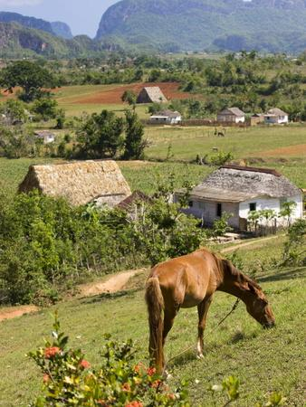 https://imgc.allpostersimages.com/img/posters/horse-grazing-on-a-hillside-in-the-valle-de-vinales-pinar-del-rio-province-cuba_u-L-PFNW2D0.jpg?p=0