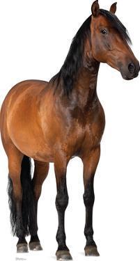 Horse Lifesize Standup