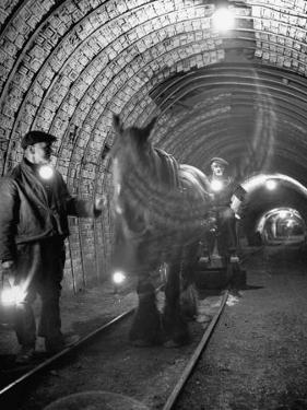 Horse Pulling Cart in Coal Mine