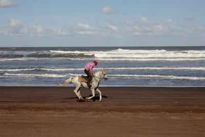 https://imgc.allpostersimages.com/img/posters/horse-rider-on-a-beach-near-azemmour-morocco_u-L-Q1GYJSM0.jpg?artPerspective=n