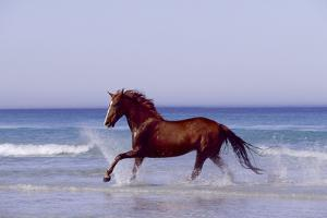 Horse Trotting Through Waves in Sea