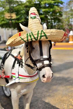 Horse with Straw Hat in Valladolid, Yucatan Peninsula, Mexico