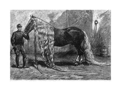 https://imgc.allpostersimages.com/img/posters/horse-with-the-longest-mane-and-tail-in-the-world-1895_u-L-PSCZLQ0.jpg?p=0