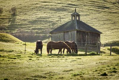 https://imgc.allpostersimages.com/img/posters/horses-and-old-barn-olema-california-usa_u-L-PN6YAB0.jpg?p=0