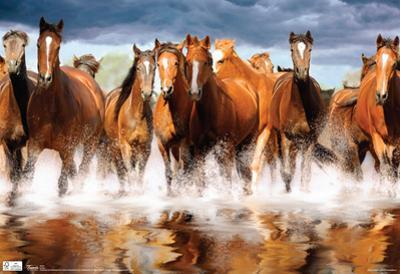 Horses Galloping Photograph Poster