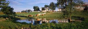 Horses Grazing at a Farm, Amish Country, Indiana, USA