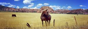 Horses Grazing in a Meadow, Kolob Reservoir, Utah, USA