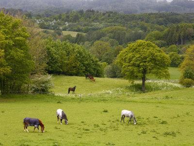 https://imgc.allpostersimages.com/img/posters/horses-in-field-near-vejle-jutland-denmark-scandinavia-europe_u-L-P91DDB0.jpg?p=0