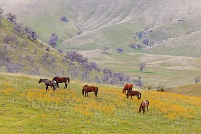 https://imgc.allpostersimages.com/img/posters/horses-in-meadow-caliente-california-usa_u-L-PN6QXH0.jpg?p=0