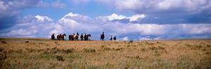 Horses on a Landscape, East Glacier Park, Glacier County, Montana, USA
