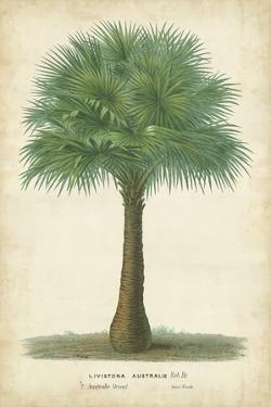 Palm of the Tropics I by Horto Van Houtteano