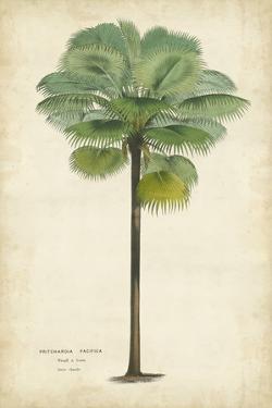 Palm of the Tropics II by Horto Van Houtteano