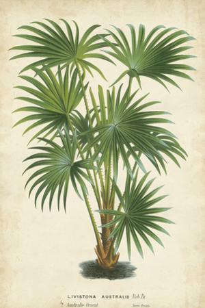Palm of the Tropics IV by Horto Van Houtteano