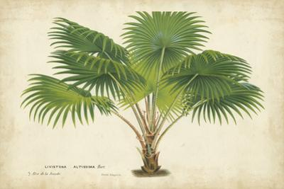 Palm of the Tropics V by Horto Van Houtteano