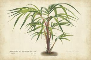 Palm of the Tropics VI by Horto Van Houtteano