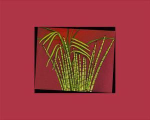 Hot pink tropical Grass