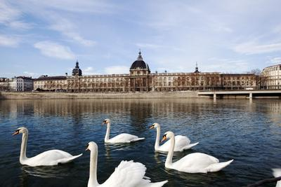 https://imgc.allpostersimages.com/img/posters/hotel-the-dieu-on-the-rhone-river-lyon-rhone-alpes-france-europe_u-L-PQ8Q2N0.jpg?p=0