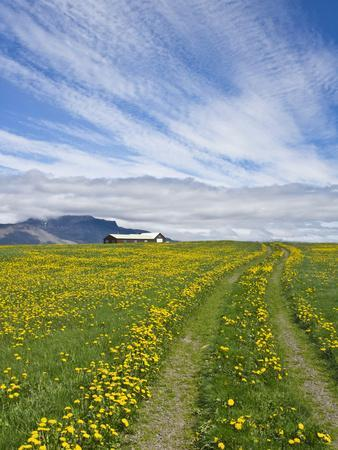 https://imgc.allpostersimages.com/img/posters/house-on-the-meadow-of-wild-flowers-iceland_u-L-PHAGNO0.jpg?p=0