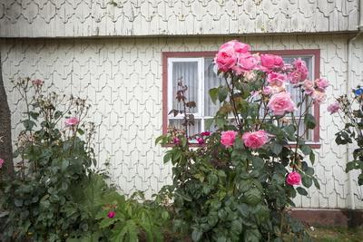 https://imgc.allpostersimages.com/img/posters/houses-built-of-wooden-tiles-island-of-chiloe-chile_u-L-PWFDAU0.jpg?p=0