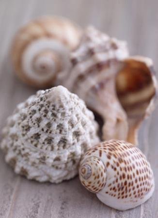 Shell Collection by Howard and Lauren Shooter and Floodgate