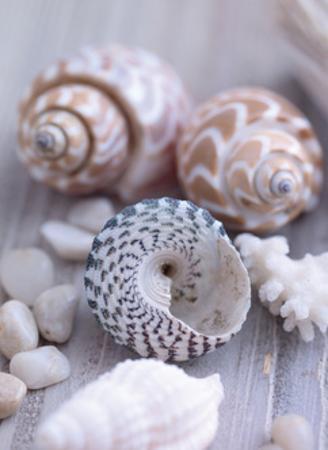 Shells and Pebbles