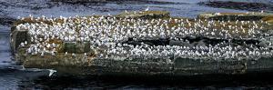 Birds on a Rock by Howard Ruby