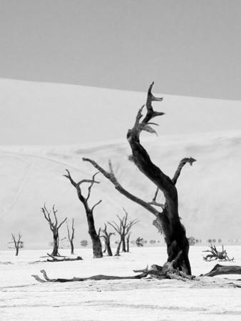 Black Trees by Howard Ruby