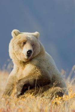 Brown Bear by Howard Ruby