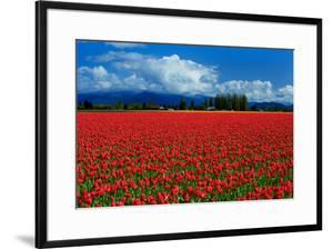 Clouds and Tulips by Howard Ruby