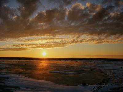 Polar Bear on the Tundra at Sunset by Howard Ruby