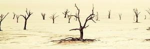 Tree Graveyard by Howard Ruby