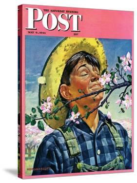 """""""Apple Blossoms,"""" Saturday Evening Post Cover, May 6, 1944 by Howard Scott"""