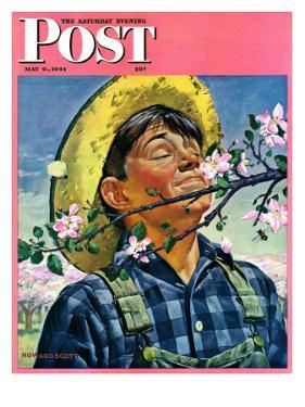 """Apple Blossoms,"" Saturday Evening Post Cover, May 6, 1944 by Howard Scott"