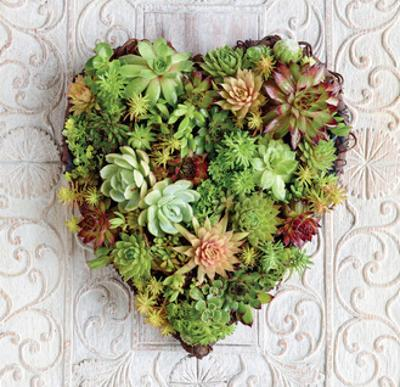 Succulent Heart by Howard Shooter