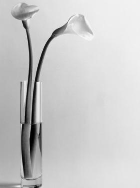 Calla Lilies in Vase by Howard Sokol