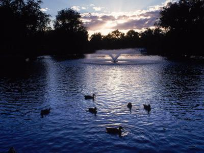 Fountain & Ducks in Water at Sunset