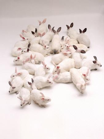 Group of Rabbits by Howard Sokol