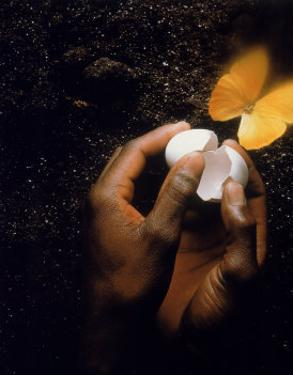 Hand with Egg Shell and Butterfly by Howard Sokol