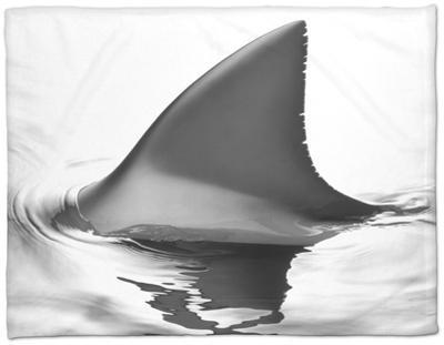 Shark Fin by Howard Sokol