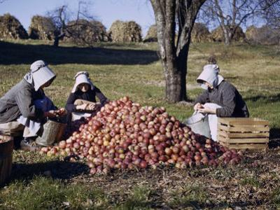 Mennonite Sisters Sitting in Orchard Prepare Apples for a Nearby Mill