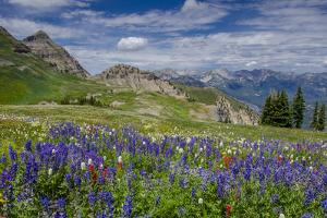 Aster, Lupine, Bistort, Indian Paintbrush, Mt Timpanogos, Utah by Howie Garber