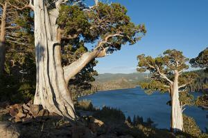 Juniper Trees Above Echo Lake, Sierra Nevada Mountains by Howie Garber