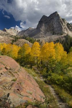 Lake Blanche Trail in Fall Foliage, Sundial Peak, Utah by Howie Garber